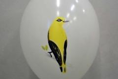 balon z nadrukiem